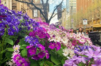 Flower abloom in the spring bringing color to vibrant Melbourne.  (Photo by Patricia Madronio, EBC Australia, Eagle News Service)