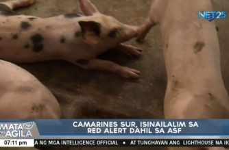 CamSur under red alert for ASF after pigs test positive in Bonbon town
