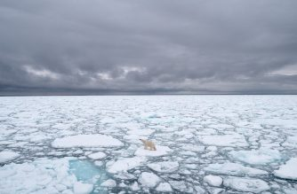 """A handout photo made available on July 17, 2020 by Polar Bears International shows a polar bear in Svalbard, Norway, in 2018. - Climate change is starving polar bears into extinction, according to research published on July 20, 2020 that predicts the apex carnivores could all but disappear within the span of a human lifetime. In some regions they are already caught in a vicious downward spiral, with shrinking sea ice cutting short the time bears have for hunting seals, while dwindling body weight undermines their chances of surviving Arctic winters without food, scientists reported in Nature Climate Change. The study calculates """"timelines of risk"""" for different polar bear demographics, exploring two alternative futures with different levels of greenhouse gas emissions and atmospheric concentrations of CO2. If business-as-usual greenhouse gas emissions continue, it's likely that all but a few polar bear populations will collapse by 2100. (Photo by BJ KIRSCHHOFFER / POLAR BEARS INTERNATIONAL / AFP) / RESTRICTED TO EDITORIAL USE - MANDATORY CREDIT """"AFP PHOTO / Polar Bears International / BJ Kirschhoffer"""" - NO MARKETING - NO ADVERTISING CAMPAIGNS - DISTRIBUTED AS A SERVICE TO CLIENTS"""