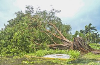 View of a fallen tree after the passage of Hurricane Delta in Cancun, Quintana Roo state, Mexico, on October 7, 2020. - Hurricane Delta slammed into Mexico's Caribbean coast early Wednesday, toppling trees, ripping down power lines and lashing a string of major beach resorts with winds of up to 110 miles (175 kilometers) per hour. (Photo by PEDRO PARDO / AFP)