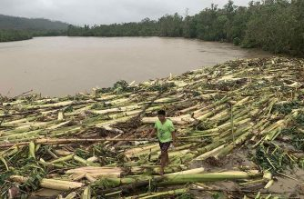 A resident walks past uprooted banana trees washed up on a river bank after Typhoon Molave hit the town of Pola, Oriental Mindoro province, on October 26, 2020. (Photo by Erik DE CASTRO / AFP)