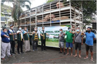 Some of the hog deliveries from Mindanao which will be delivered to Metro Manila markets (Photo courtesy Department of Agriculture)