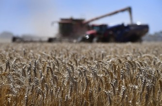 A photo taken on January 12, 2021 shows a paddock of wheat being harvested on a farm near Inverleigh, some 100kms west of Melbourne. (Photo by William WEST / AFP)