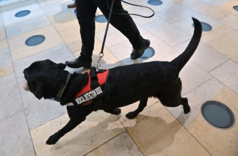 A dog is put through its paces during a demonstration by the charity Medical Detection Dogs, which trains dogs to detect the odour of human disease, at Paddington Station in central London on October 27, 2020. (Photo by JUSTIN TALLIS / various sources / AFP)