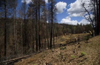 Crews inspect work of loggers as they remove trees that burned during the Bear Fire amidst concerns of future fire risk during the California drought emergency on May 25, 2021 near Berry Creek, California. - Summer has not even begun and Lake Oroville, the second-largest reservoir in California that provides drinking water to more than 25 million people, is at less than half of its average capacity at this time of year. It is a worrying indication of the worsening drought conditions in the northern part of the Golden State. (Photo by Patrick T. FALLON / AFP)
