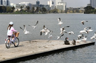 A young girl scares off seagulls while out exercising with her family in Melbourne on September 16, 2021, as the state government announced a loosening of Covid-19 restrictions. (Photo by William WEST / AFP)