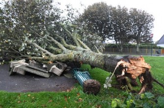 A picture shows a fallen tree after the Aurore storm on October 21, 2021 in Plozevet, Brittany. - More than 250,000 homes are without electricity and train traffic is disrupted in northern France, mainly in Normandy, due to the strong winds that swept the country overnight from October 20 to 21. (Photo by Fred TANNEAU / AFP)